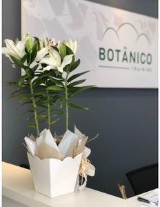 Botânico Training