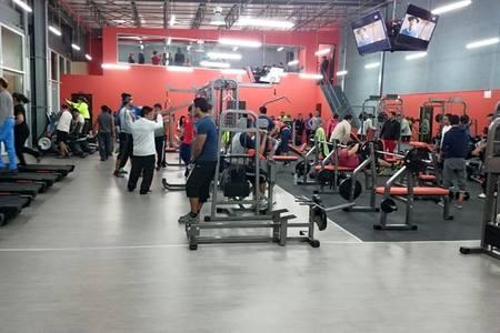 Build A Body Gym